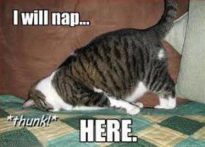 i-will-nap-here-cat